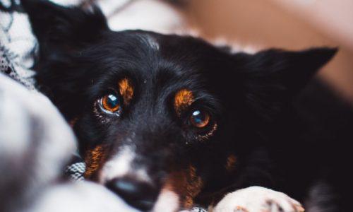Jak wychować psa bez stresu?