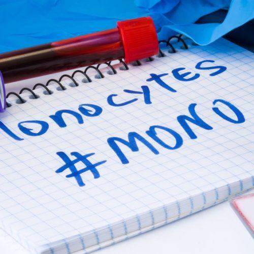 Monocyty – co to? Podwyższony poziom monocytów – dlaczego?