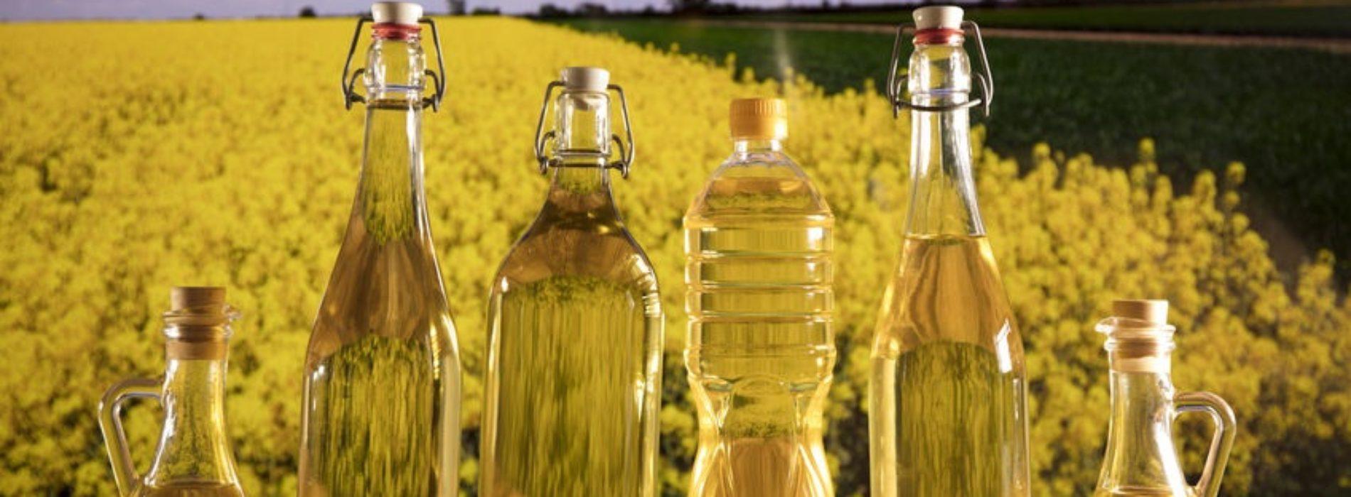 Olej rzepakowy – Tłoczony na zimno, właściwości i zastosowanie