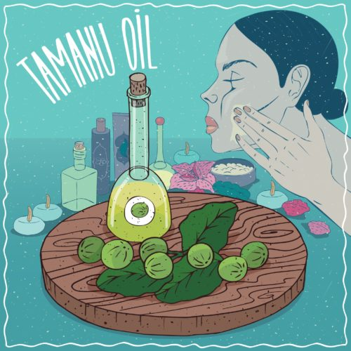 Olej tamanu – Jakie ma właściwości i zastosowanie?