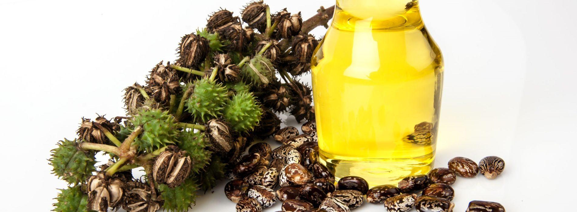Olej rycynowy – Właściwości oraz zastosowanie oleju rycynowego